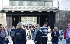 皇居乾通り一般公開で桜見物する外国人