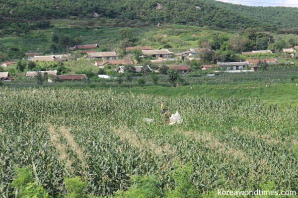 韓国・農村復興庁による440万トンの内訳