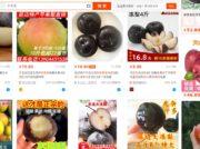 アジア1の生産を誇る延辺龍井リンゴ梨 接ぎ木から100周年を祝う