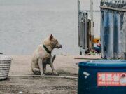 朝鮮半島で最も恐ろしい猛獣は!? 恐怖のウイルス再発生の兆しあり