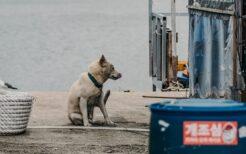 野犬による被害が増えている