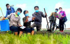 マスク姿で農作業をする北朝鮮人