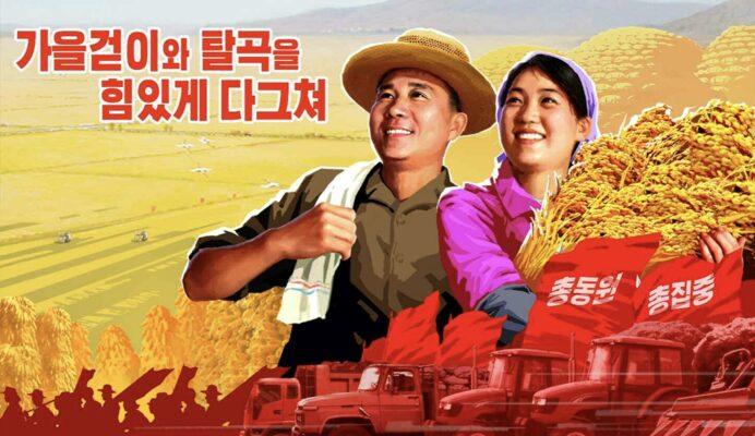 北朝鮮で本格化する秋の収穫